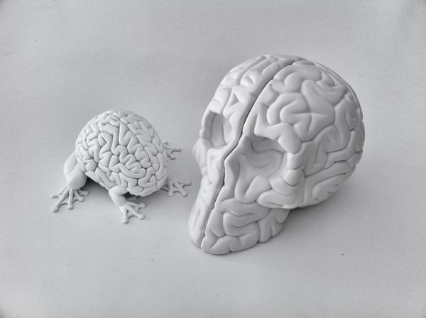 7 Методов воздействия на «рептильный мозг» клиентов