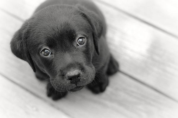 Дискриминация домашних животных, или почему людям не нравятся черные собаки?