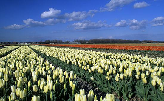 Голландия борется за цветочный рынок рф