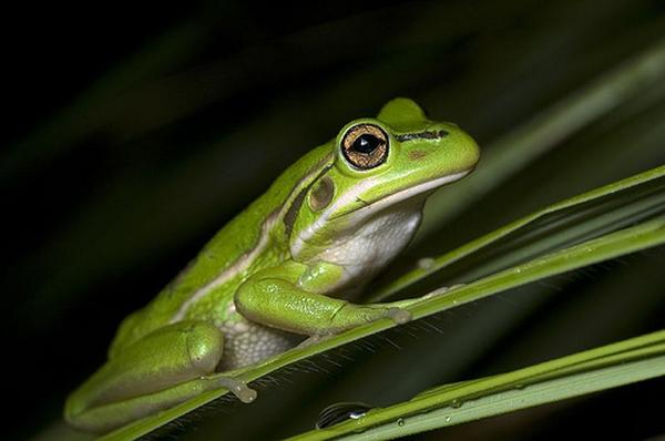 Обновление платформы lpgenerator: интеграция с системой защиты от скликивания clickfrog