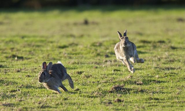 Погоня за двумя зайцами: как расширение бизнеса влияет на эффективность