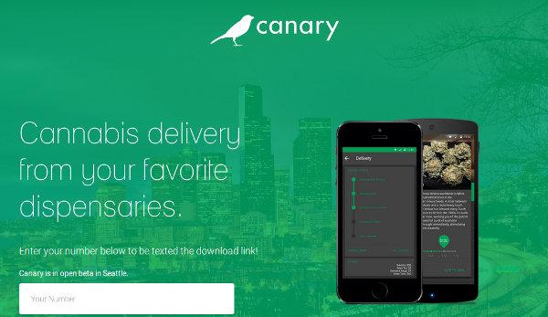 Стартап canary: законный способ заработать на медицинской марихуане