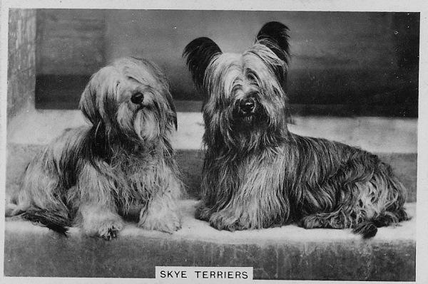 Жестокий биомаркетинг: выживут ли викторианские собаки?